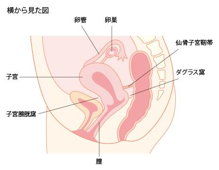 子宮内膜症 公益社団法人 日本...